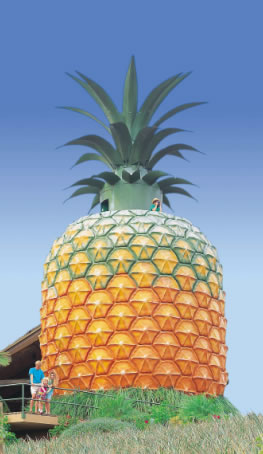 The Big Pineapple - C Tourism