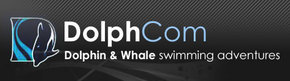Dolphcom - Dolphin  Whale Swimming Adventures - C Tourism