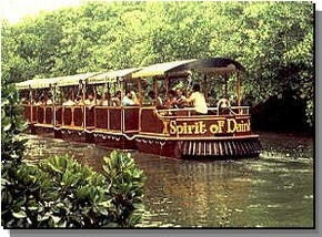 Daintree Rainforest River Trains - C Tourism