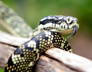 Reptile Encounters - C Tourism