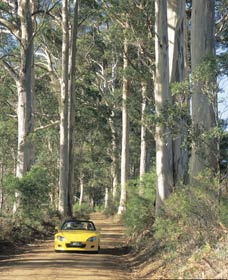 Mount Shadforth Scenic Drive - C Tourism