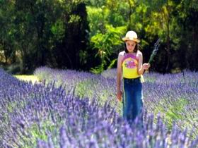 Brayfield Park Lavender Farm - C Tourism