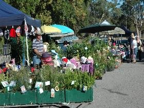 Meadows Monthly Market - C Tourism