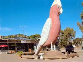 The Big Galah - C Tourism