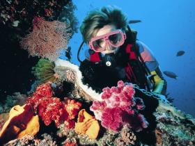 Cook Island Dive Site - C Tourism