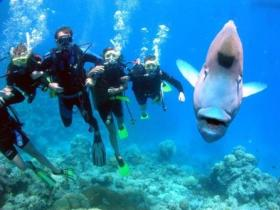 Jew Shoal Dive Site - C Tourism