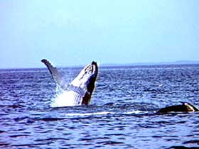 Whale Watching - C Tourism