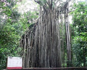 Curtain Fig National Park - C Tourism