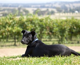 Moothi Estate Vineyard and Cellar Door - C Tourism
