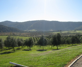 Hastings Valley Olives - C Tourism