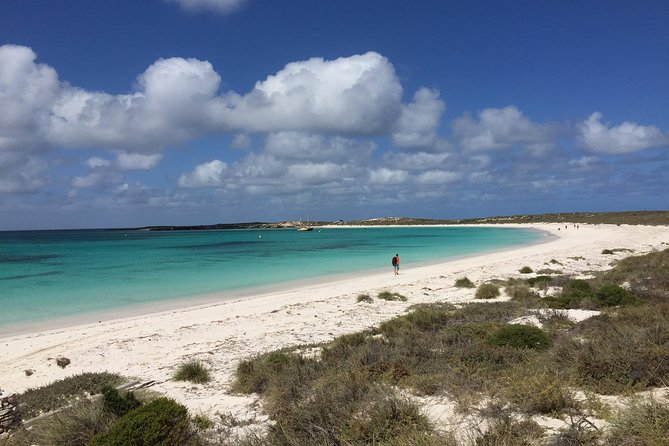 Abrolhos Island Half Day Fly and Flipper - C Tourism