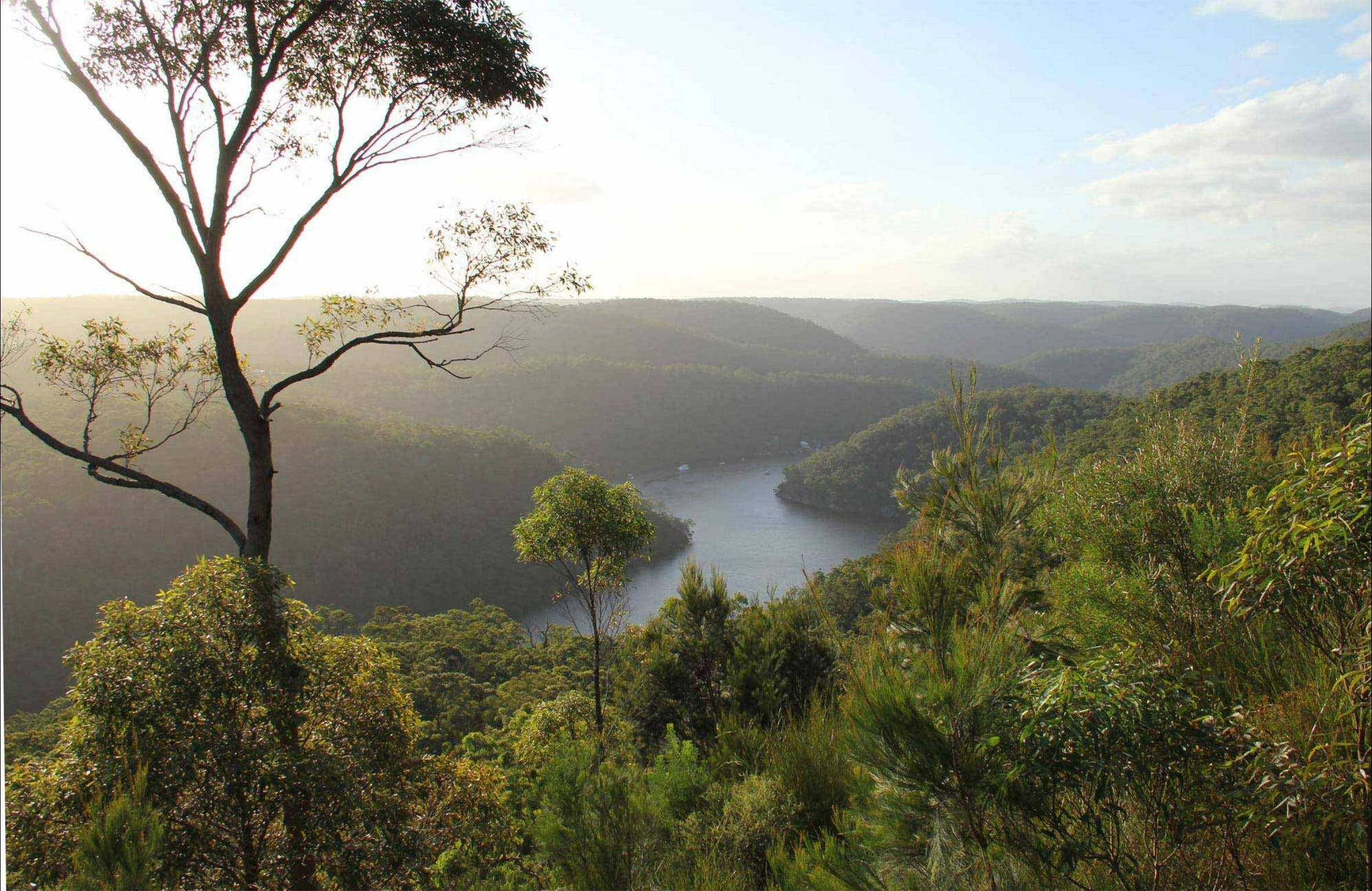 Great North walk - Berowra Valley National Park - C Tourism