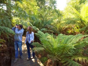 Endeavour Fern Gully Walks - C Tourism
