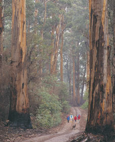 Beedelup National Park - C Tourism