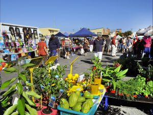 Maclean Community Monthly Markets - C Tourism
